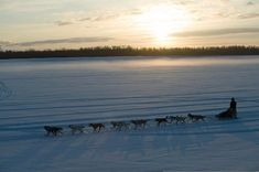 The Iditarod. This use to be all I wanted to do when I got older, but now i just want to see the race and Alaska<3