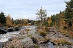Hourunkoski, Pyhäjoki, syksy, ruska