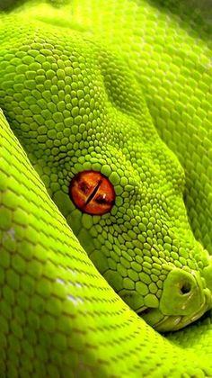 Snakes Reptiles Animals snake wallpaper x Les Reptiles, Reptiles And Amphibians, Mammals, Beautiful Creatures, Animals Beautiful, Cute Animals, Baby Animals, Beautiful Snakes, The Meta Picture