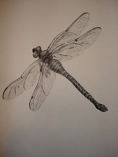 Someday possible tattoo - dragonfly study by eyez2theskiez, via Flickr