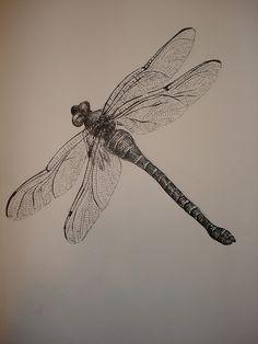 dragonfly study by eyez2theskiez, via Flickr  (possible tatoo?)