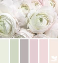 Roses Nuance de rose et de vert
