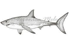 Great White Shark  © Verónica Melo www.veronicamelo.com Verona, Skateboard Design, Great White Shark, Shark Week, Sharks, Surfboard, Tatoos, Whale, Design Inspiration