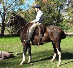 VENDIDO A EDGARDO -PICAZO OVERO garantido excelente rienda muy recomendable Tack, Polo, Horses, Country, Animals, Horses For Sale, Argentina, Horse, Animais