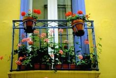 Good Flowers For Flower Boxes | Balconies come in all sizes and shapes, as do flower boxes.