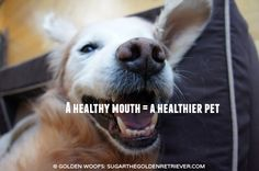 A Healthy Mouth = A Healthier Pet #SmoochUrPooch 3 Types Of Dog Dental Health Products from #ad TropiClean Pet Products