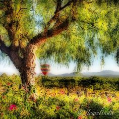 Temecula, CA Winery