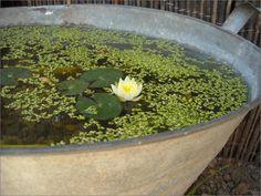 Il decoupage di Antonella: Mini pond