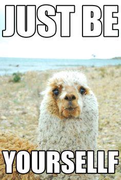 Great life advice from a llama!