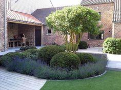 Dream Garden, Home And Garden, Landscape Design, Garden Design, Architectural Plants, Modern Front Yard, European Garden, Specimen Trees, Garden Seating