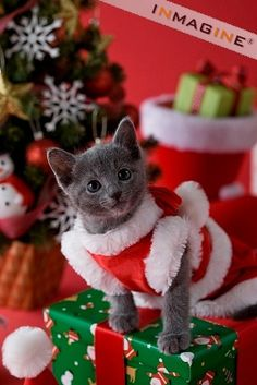 "* * KITTEN: "" Somethin' bad haz happeneds. Me humans think de be clever. Bulk be hinderin' me Christmas run."""