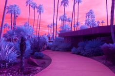 Surreal Californian Landscapes in Infrared | Netfloor USA