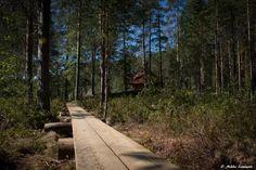 Kalajan kierroksen ja Vuori-Kalajan kotalaavun avajaiset Etelä-Konneveden kansallispuistossa   Retkipaikka