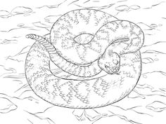 Rattlesnake Coloring Page - Rattlesnake are a group of poisonous snakes of the genera Crotalus and Sistrurus of the subfamily Crotalinae (vipers). The scientific name Crotalus wh. Free Printable Coloring Pages, Free Coloring Pages, Coloring Sheets, Colouring, Coloring Books, Poisonous Snakes, Printable Pictures, Reptiles And Amphibians, Print Pictures