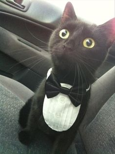 tuxedo cat @elizabethlastnameflesh and @jmarek