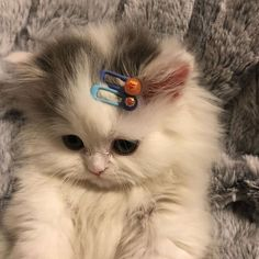 Cute Baby Cats, Cute Little Animals, Cute Cats And Kittens, Cute Funny Animals, Kittens Cutest, Cute Dogs, Funny Cats, Cats Humor, Funny Horses