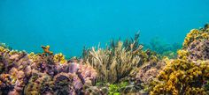 #coralreef #caribbean #seaturtles #snorkeling @KabuTours  www.kabutours.com Snorkeling, Caribbean, Tours, Painting, Art, Diving, Art Background, Painting Art, Kunst
