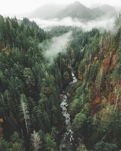 "Misty Forest ↟ (@forest) na Instagramie: ""Vance Creek, Washington  cc: @kristiankeenen"""