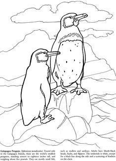 Galapagos Islands Coloring Book Dover Publications