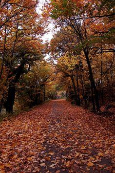 Autumn path, Italy
