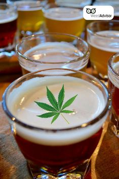 and are cousins. Both hops and belong to the family It is actually possible to graft hops onto plants. The prospect of hybrid brews is titillating, isn't it? Medical Marijuana, Cannabis, North York, Buy Weed Online, Ganja, Cousins, Hemp, Brewing, Recipies