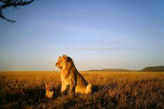 Imágenes de Arusha y del parque nacional, Tanzania.- El Muni.