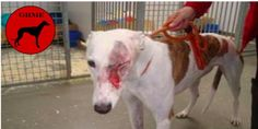 petizione: Greyhound Racing Must End