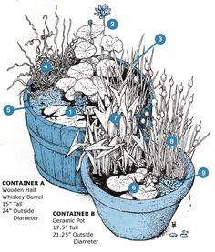 Aquatic Plants (for Natural Swimming Pool): Nymphaea 'Perry's Baby Red' (water-lily), Nelumbo 'Chawan Basu' (sacred lotus), Acorus gramineus 'Variegatus' (Japanese rush), Juncus effusus 'Spiralis' (corkscrew rush), Azolla filiculoides (fairy moss), Nymphaea 'Joanne Pring' (water-lily), Sagittaria latifolia (American arrowhead), Typha minima (dwarf cattail), Ludwigia sedioides (mosaic plant)
