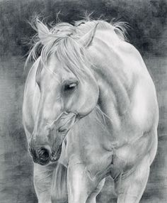 This is a horse I have had in my 'to-do' file for a while now - photo courtesy of Wetcanvas. My original intention was to do this in colour but changed my mind after enjoying working with pencil again when doing Duke, the Newfoundland.
