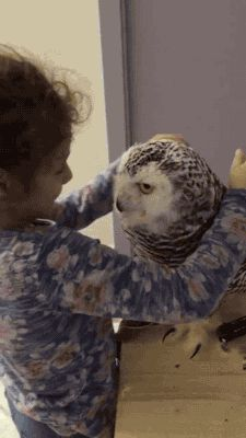 30 Images That Prove Owls Are the Cutest Birds on the Planet | Pleated-Jeans.com