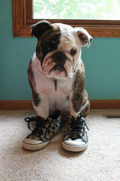 Dogs in Sneakers | BaggyBulldogs