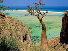 Socotra, also spelt Soqotra, is a small archipelago of four islands in the Indian Ocean. The largest island, also called Socotra, is about 95% of the landmass of the archipelago. The island is very isolated and through the process of speciation, a third of its plant life is found nowhere else on the planet. It has been described as the most alien-looking place on Earth.