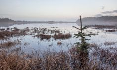 Pine tree with a view Pine Tree, Denmark, My Photos, Explore, Mountains, Landscape, Nature, Travel, National Forest