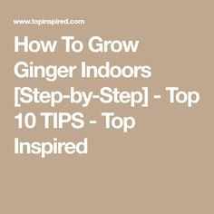 How To Grow Ginger Indoors [Step-by-Step] - Top 10 TIPS - Top Inspired