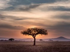 Audley Travel Print Advert By Sleek Machine: Safari Audley Travel, Countries To Visit, Photos Voyages, African Countries, Landscape Pictures, African Safari, African Art, Africa Travel, Travel Pictures