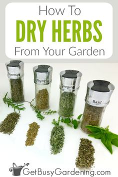 Drying herbs is easy and there are many uses for them like for tea cooking or filling your spice rack Learn all about how to dry garden fresh herbs and the best types to. Herb Garden In Kitchen, Dry Garden, Kitchen Herbs, Herbs Garden, Garden Rack, Garden Beds, Herb Garden Indoor, Hanging Herb Gardens, Balcony Herb Gardens