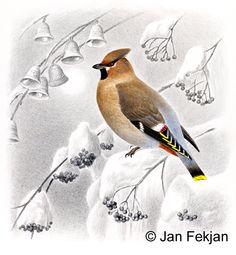 Jan Fekjan: Sidensvans Living Room Art, Besties, Giclee Print, Birds, Fine Art, Prints, Artist, Animals, Animales