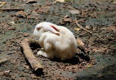 Punished Rabbit