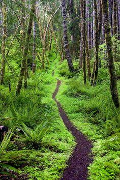 El sendero de Aurora Ridge, Washington