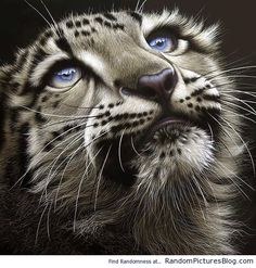 Beautiful Up close photo of a Snow Leopard