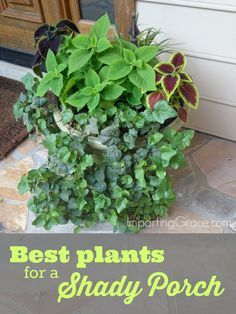 ideas for exterior house porch plants Front Porch Plants, Patio Plants, Cool Plants, Outdoor Plants, Garden Plants, House Plants, Outdoor Gardens, Front Porches, Outdoor Shade
