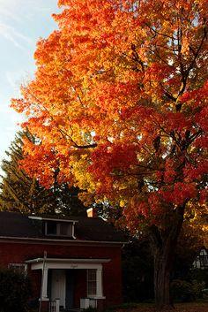 Fall colours in Hamilton, Canada
