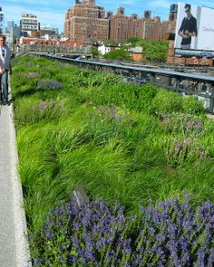 "Imagine a ""high line"" on both sides of the interstate and across adjoining several times to a dozen or more along its length over the interstate. Landscape Architecture, Landscape Design, Garden Design, Urban Landscape, Prado, Pocket Garden, Prairie Garden, High Line, Lawn And Garden"