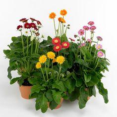 brauchen prächtig zimmerpflanzen die wenig licht