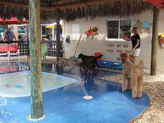 Love My Dog Resort and Playground