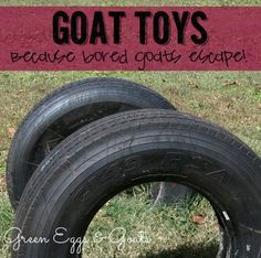 goat toys and ways to entertain your goat -- because bored goats escape!!