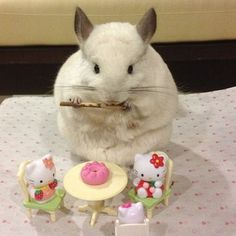 """""""It's OK to bring your own snacks to a party.""""   Bubu The Chinchilla Will Inspire You To Live A Better Life"""
