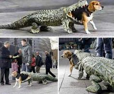 6. Alligator Eating Dog Costume | Top 10 Hilarious Dog Costumes