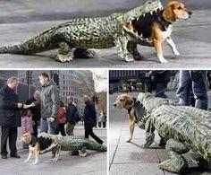 6. Alligator Eating Dog Costume   Top 10 Hilarious Dog Costumes