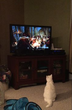 Snowball watching the Ewoks on Return of the Jedi